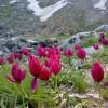 کوهستان الوند همدان گنجینهای ارزشمند برای علاقمندان به ورزش و طبیعت