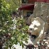 باغ موزه وزیری؛ جلوهای از عشق به سرزمین مادری